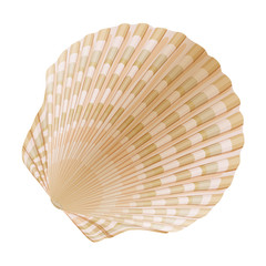 Seashell_a