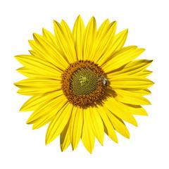 abeille sur fleur de tournesol