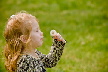Young girl trying to blow dandelion seeds