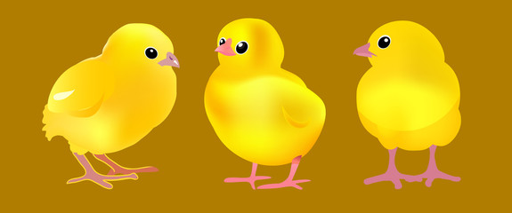 three chicks on the gold