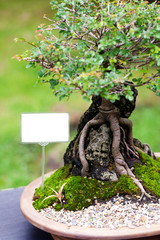 beautiful bonsai in a botanical garden