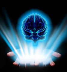 Hands holding human brain
