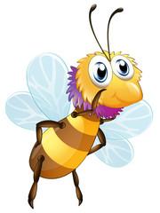 A big bumblee bee
