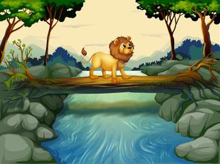 Foto op Plexiglas Rivier, meer A lion crossing the river