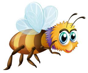 A big fat bee