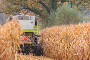 Harvesting cereals in autumn