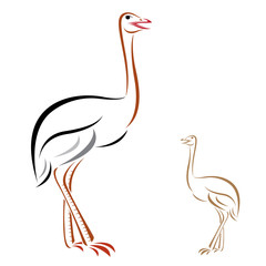 Vector image of an ostrich on white background