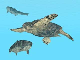 Meeresschildkröte Archelon und Dunkleosteus