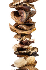 mushroom dried