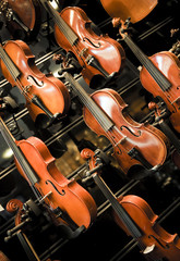 Violins, violas and cellos