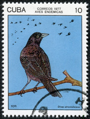 stamp printed by Cuba, shows crow