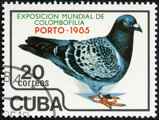 stamp printed in Cuba, shows pigeon bird