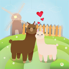 Alpacas couple