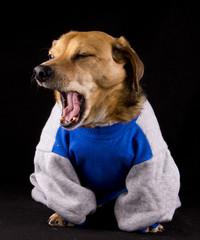 yawn dog