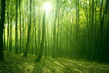 Papiers peints Forets forest