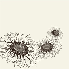 Illustration of sunflower