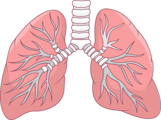 Illustration of human lung