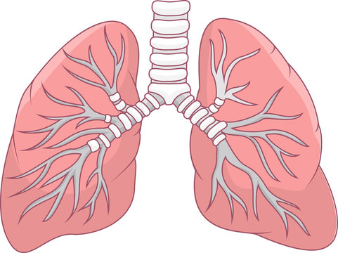 Illustration of human lung