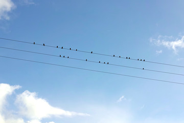 Small birds on electric wires against a clear sky