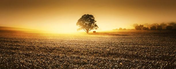 Clare Valley Farmland