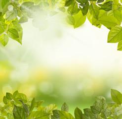 green leaves morning