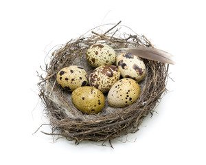 Six eggs in a nest on a white background. horizontal photo.