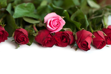 Bouquet of red and pink roses, isolated on white background