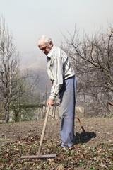 Пожилой мужчина убирает граблями сухие листья  в саду