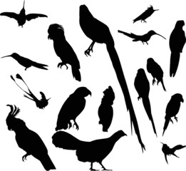 sixteen isolated black birds