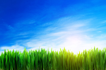 Perfect grass field nature background