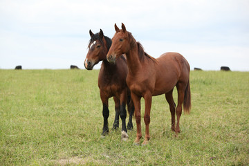 In de dag Olijf Two young horses together on pasturage