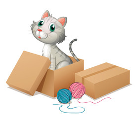 Printed kitchen splashbacks Cats A cat inside the box