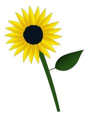 Einfache Sonnenblume nach Kinderzeichnung