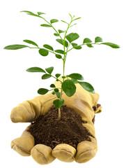 concept main verte, protection de la nature