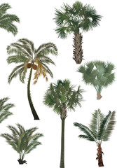 green palm trees collection isolated on white