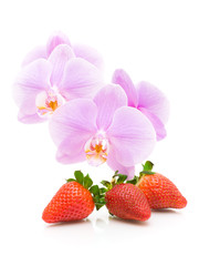 strawberry and orchid close up on white background