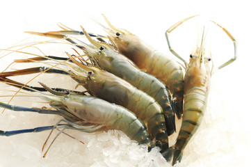 Raw shrimp on ice background