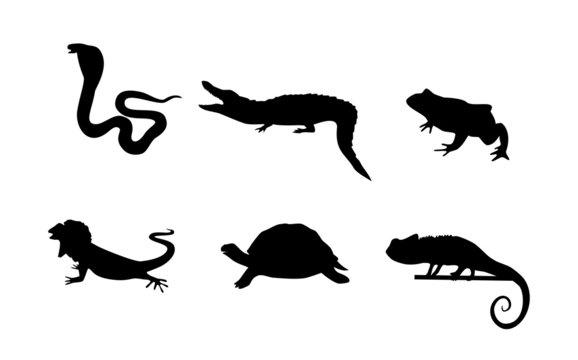 Vector reptiles