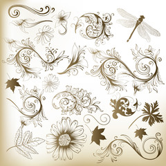 Collection of swirl floral vector elements for design