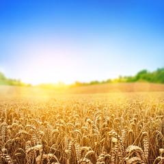 Tuinposter Cultuur Golden Wheat Field