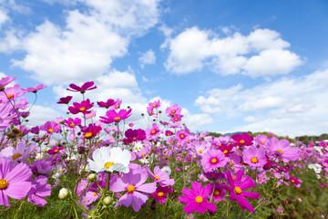Fond de hotte en verre imprimé Univers Cosmos flower and the sky