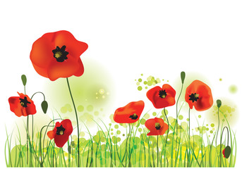 Poppies Field, vector illustration
