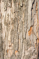 tree dried bark