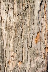tree dried bark