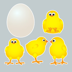 chicks with egg