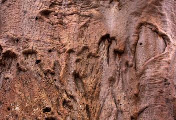 Baobab tree bark background with heart shape