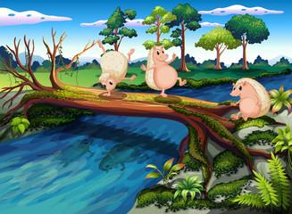 Foto op Plexiglas Rivier, meer Hedgehogs playing at the river