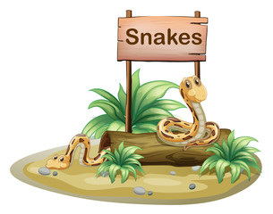 A wooden signboard with snakes