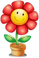 A flower inside a pot