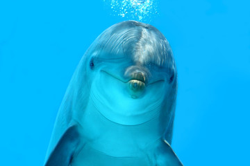 Photo sur Plexiglas Dauphin Dolphin Look